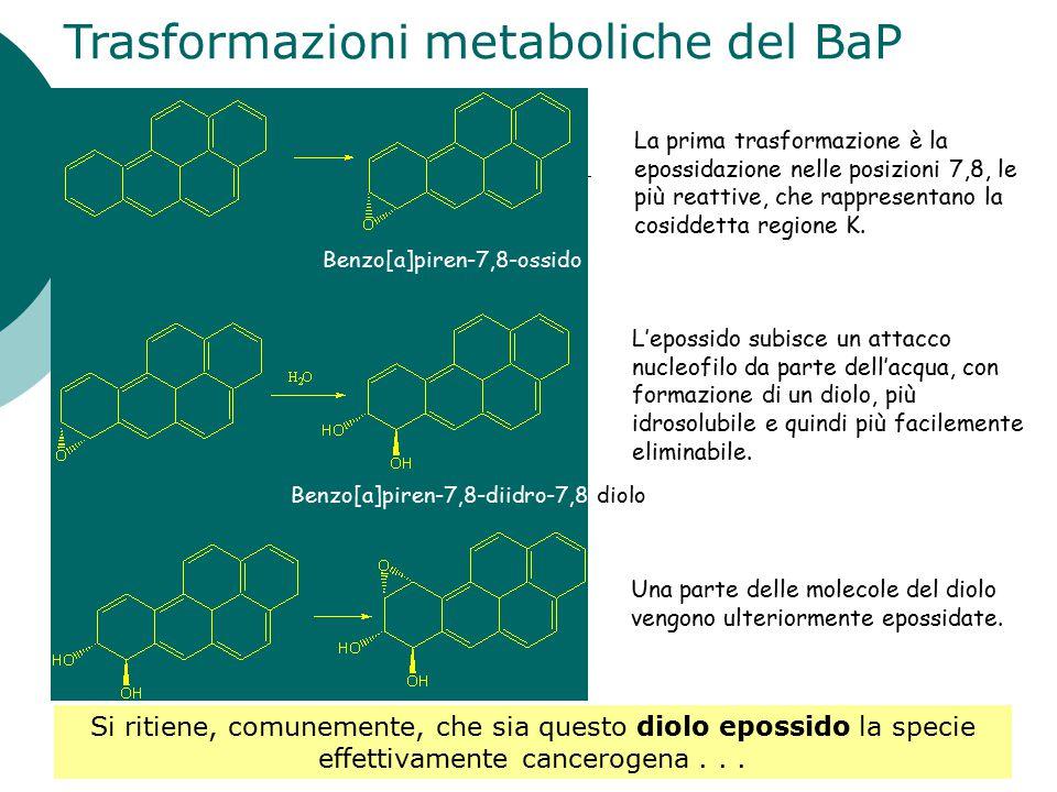 Trasformazioni metaboliche del BaP L'epossido subisce un attacco nucleofilo da parte dell'acqua, con formazione di un diolo, più idrosolubile e quindi