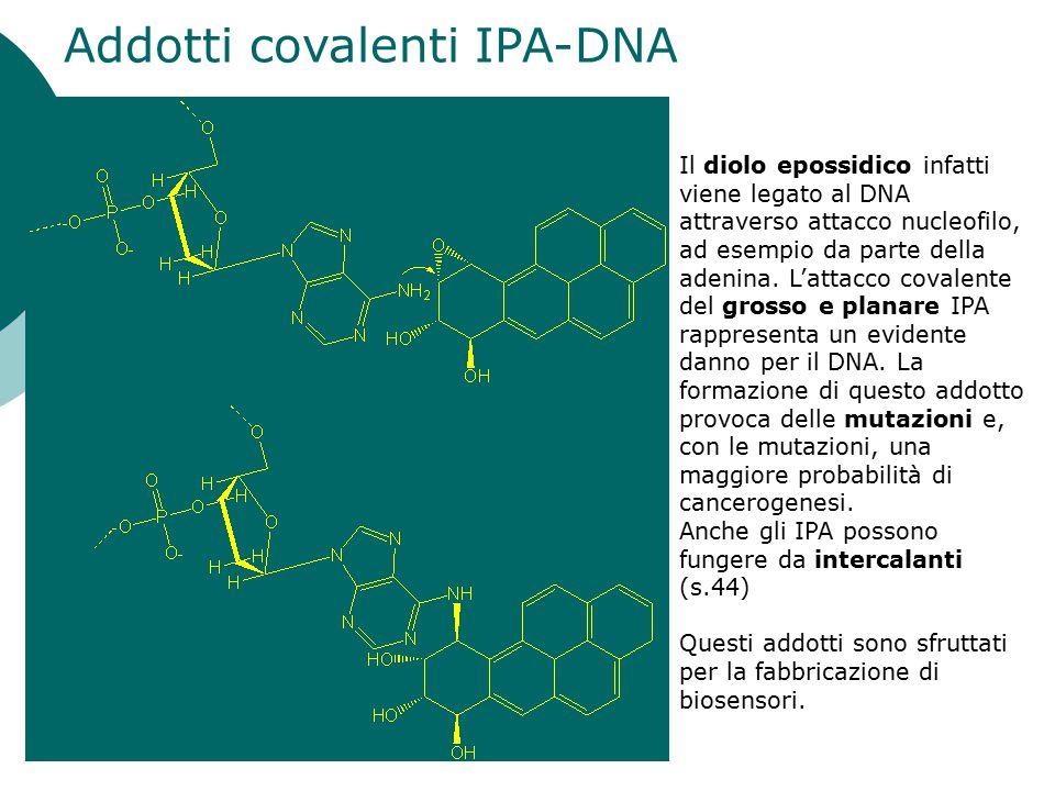 Addotti covalenti IPA-DNA Il diolo epossidico infatti viene legato al DNA attraverso attacco nucleofilo, ad esempio da parte della adenina. L'attacco