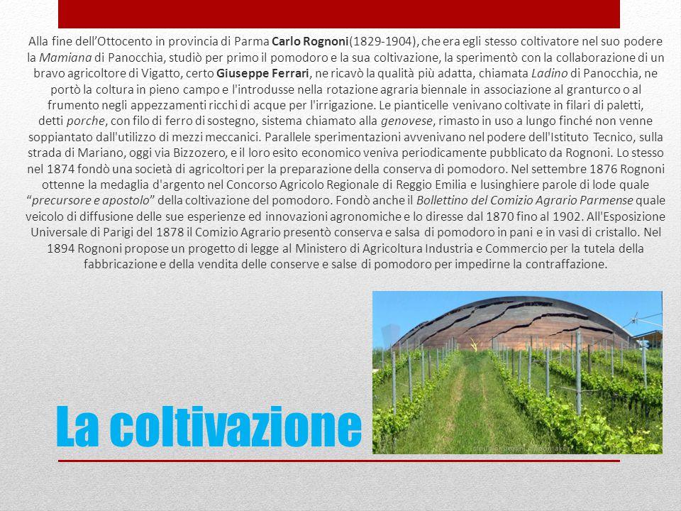 La coltivazione Alla fine dell'Ottocento in provincia di Parma Carlo Rognoni(1829-1904), che era egli stesso coltivatore nel suo podere la Mamiana di