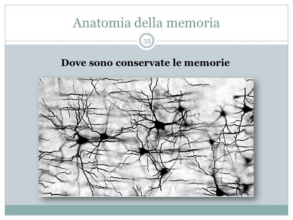Anatomia della memoria Dove sono conservate le memorie 35