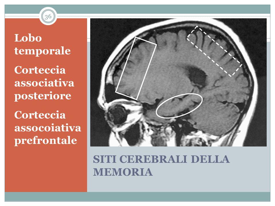SITI CEREBRALI DELLA MEMORIA Lobo temporale Corteccia associativa posteriore Corteccia assocoiativa prefrontale 36