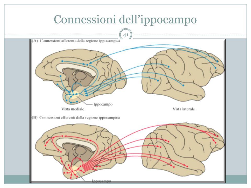 Connessioni dell'ippocampo 41