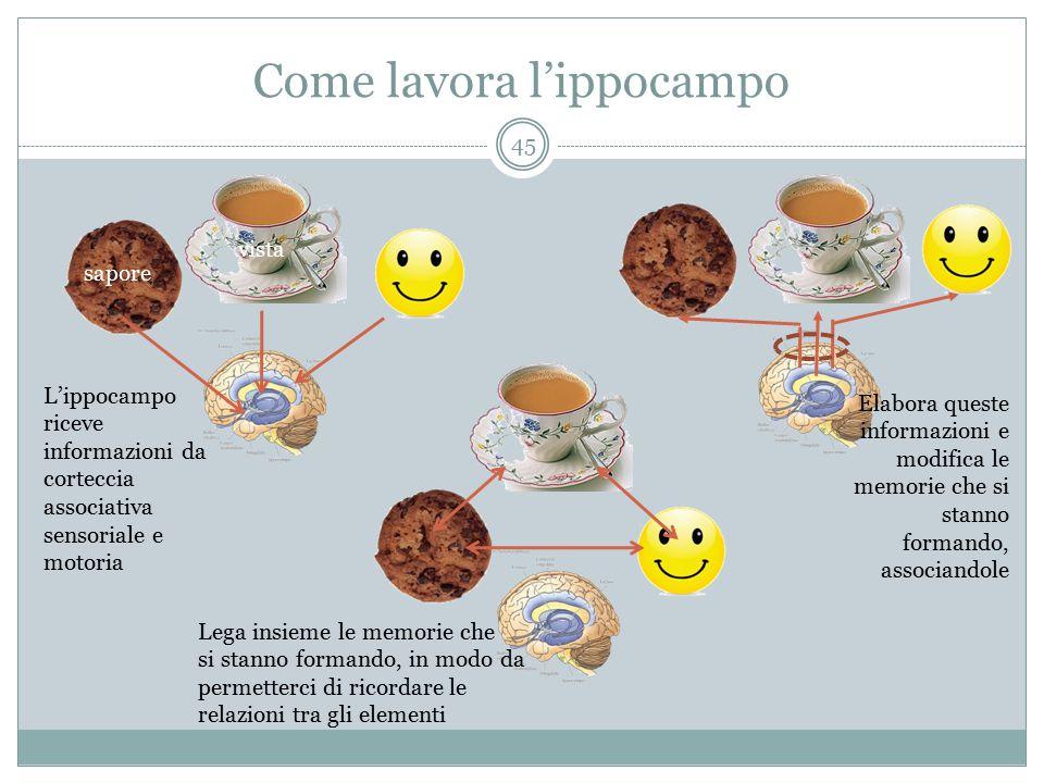 Come lavora l'ippocampo sapore vista L'ippocampo riceve informazioni da corteccia associativa sensoriale e motoria Elabora queste informazioni e modif