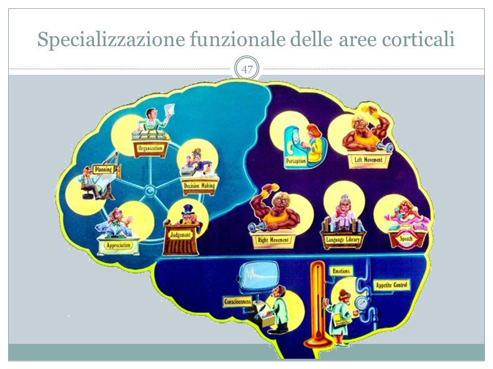 Specializzazione funzionale delle aree corticali 47