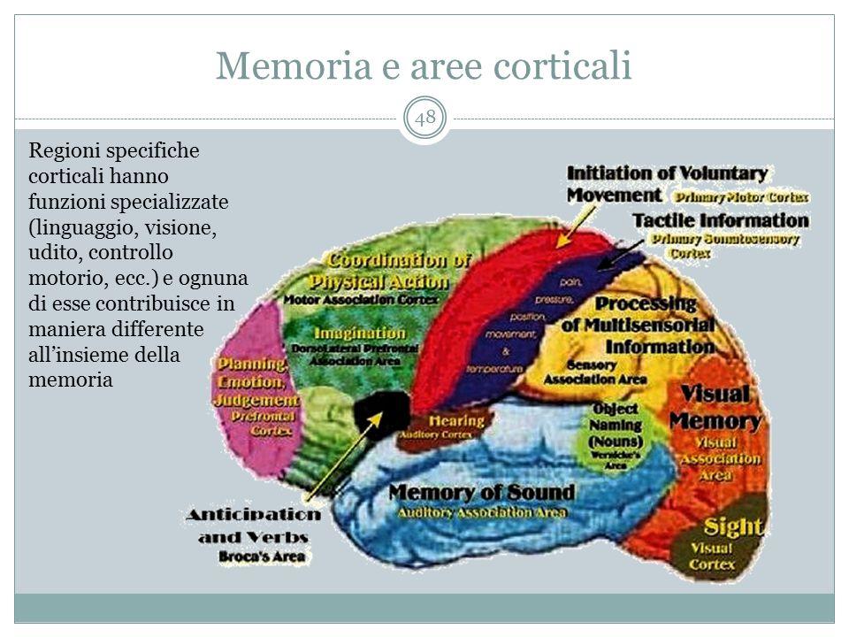 Memoria e aree corticali Regioni specifiche corticali hanno funzioni specializzate (linguaggio, visione, udito, controllo motorio, ecc.) e ognuna di e