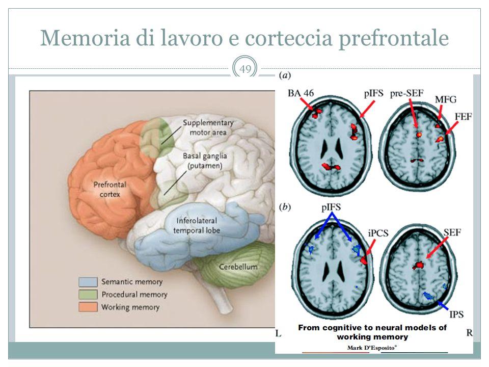 Memoria di lavoro e corteccia prefrontale 49
