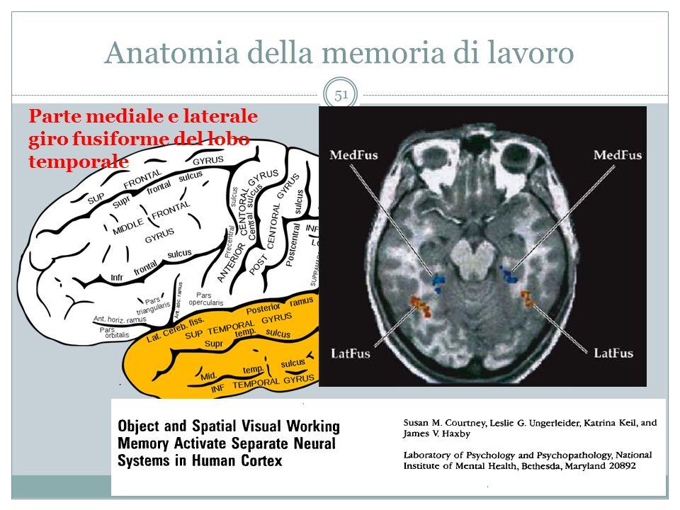 Anatomia della memoria di lavoro Parte mediale e laterale giro fusiforme del lobo temporale 51