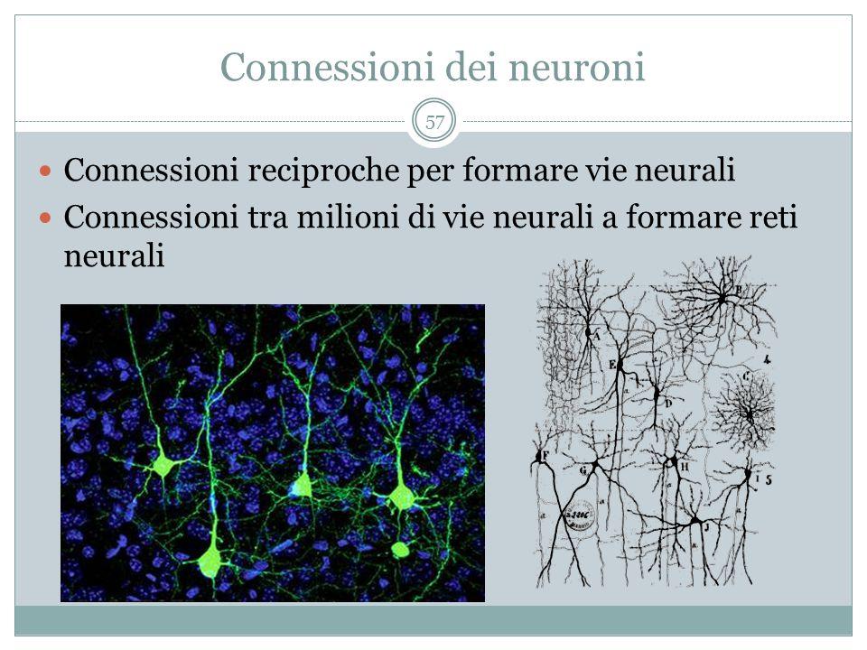 Connessioni dei neuroni Connessioni reciproche per formare vie neurali Connessioni tra milioni di vie neurali a formare reti neurali 57