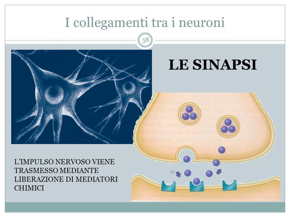 I collegamenti tra i neuroni LE SINAPSI L'IMPULSO NERVOSO VIENE TRASMESSO MEDIANTE LIBERAZIONE DI MEDIATORI CHIMICI 58