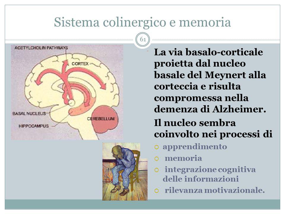 Sistema colinergico e memoria La via basalo-corticale proietta dal nucleo basale del Meynert alla corteccia e risulta compromessa nella demenza di Alz