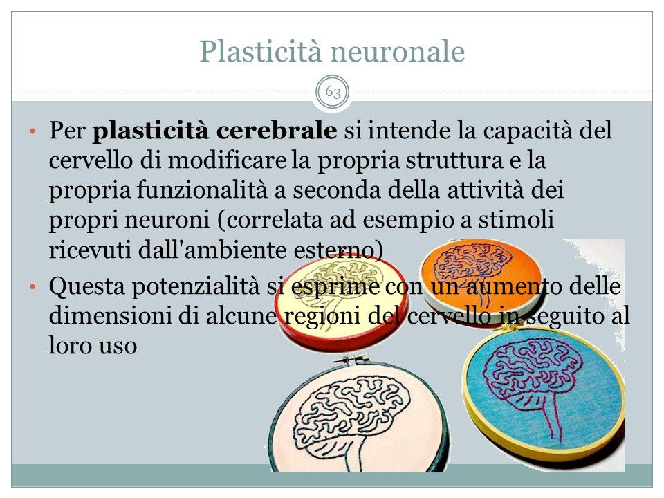 Plasticità neuronale Per plasticità cerebrale si intende la capacità del cervello di modificare la propria struttura e la propria funzionalità a secon