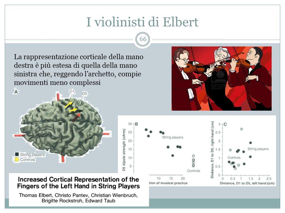 I violinisti di Elbert La rappresentazione corticale della mano destra è più estesa di quella della mano sinistra che, reggendo l'archetto, compie mov