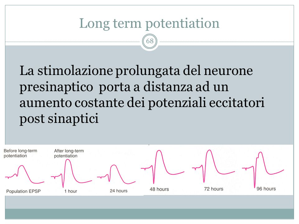 Long term potentiation La stimolazione prolungata del neurone presinaptico porta a distanza ad un aumento costante dei potenziali eccitatori post sinaptici 68