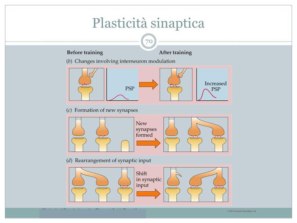 Plasticità sinaptica 70