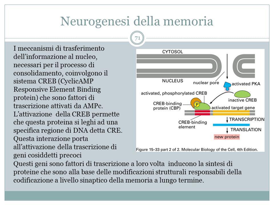 Neurogenesi della memoria 71 I meccanismi di trasferimento dell'informazione al nucleo, necessari per il processo di consolidamento, coinvolgono il si