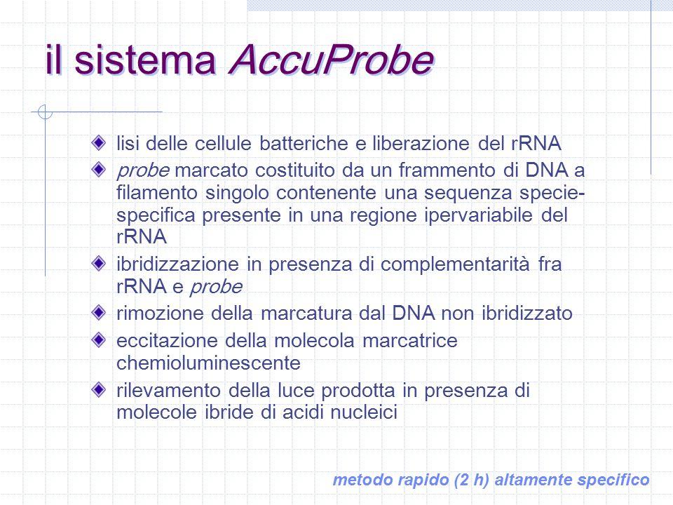 metodi di identificazione alternativi DNA probe HPLC degli acidi micolici sequenziamento genico 16S rDNA SOD HSP65