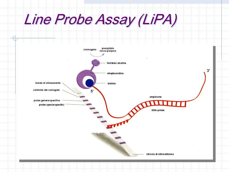 HPA (hybridization protection assay) gli esteri di acridinio utilizzati come marcatori emettono luce se eccitati chimicamente nel DNA a catena singola la molecola marcatrice è esposta all azione di eventuali agenti inattivanti la struttura assunta dall acido nucleico a catena doppia protegge la molecola marcatrice dall azione di eventuali agenti inattivanti l aggiunta di agenti inattivanti elimina ogni possibilità di emissione di segnale da parte di molecole non ibridizzate, l emissione di luce è pertanto indice di avvenuta ibridizzazione