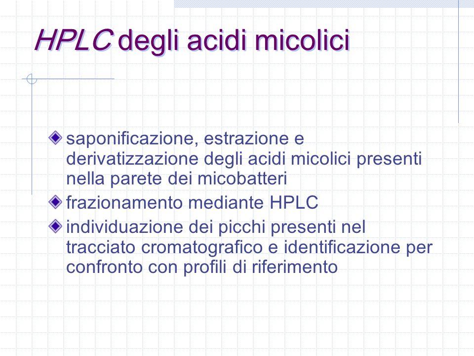 acidi grassi, ramificati in posizione  presenti nella parete batterica dei generi: Corynebacterium: 22-38 atomi di C Rhodococcus: 34-52 atomi di C Nocardia: 44-60 atomi di C Gordona: 48-66 atomi di C Tsukamurella: 64-78 atomi di C Mycobacterium: 60-90 atomi di C presenza di numerosi gruppi funzionali che differenziano 7 tipi di acidi micolici micobatterici alfa-, alfa -, metossi-, keto-, epossi-, cere, omega metossi- gli acidi micolici