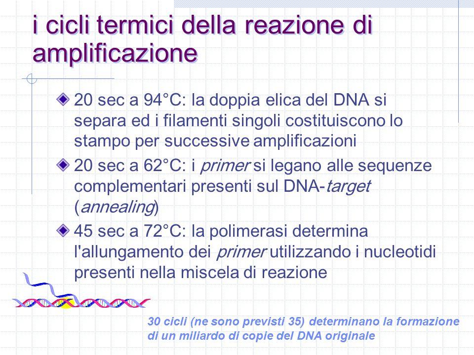 il sistema AmpErase per la prevenzione delle contaminazioni il DNA-target non contiene uracile il DNA-amplificato contiene uracile al posto della timina l aggiunta di uracil-N-glicosilasi al materiale da amplificare determina la distruzione di qualsiasi traccia di DNA contaminante (frutto di precedenti amplificazioni); l enzima è invece del tutto inattivo sul DNA-target