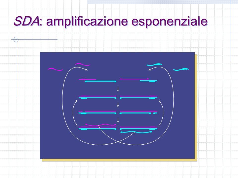 bamper primer sito di restrizione 5' 3' target la Strand Displacement Amplification TARGET: IS6110 PRINCIPALI COMPONENTI DELLA MISCELA DI AMPLIFICAZIONE: bamper primer polimerasi enzima di restrizione non occorrono cicli termici perché manca la fase di denaturazione
