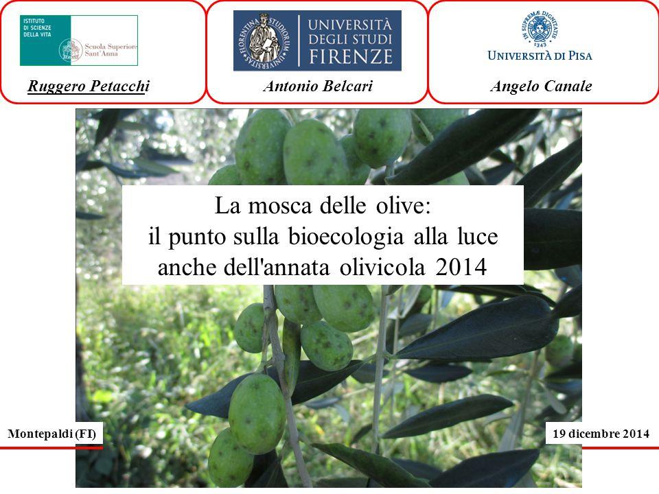 La mosca delle olive: il punto sulla bioecologia alla luce anche dell annata olivicola 2014 Ruggero Petacchi Antonio Belcari Angelo Canale Montepaldi (FI)19 dicembre 2014