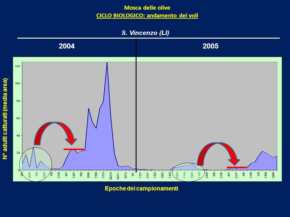 20042005 Mosca delle olive CICLO BIOLOGICO: andamento dei voli Epoche dei campionamenti N° adulti catturati (media area) S.