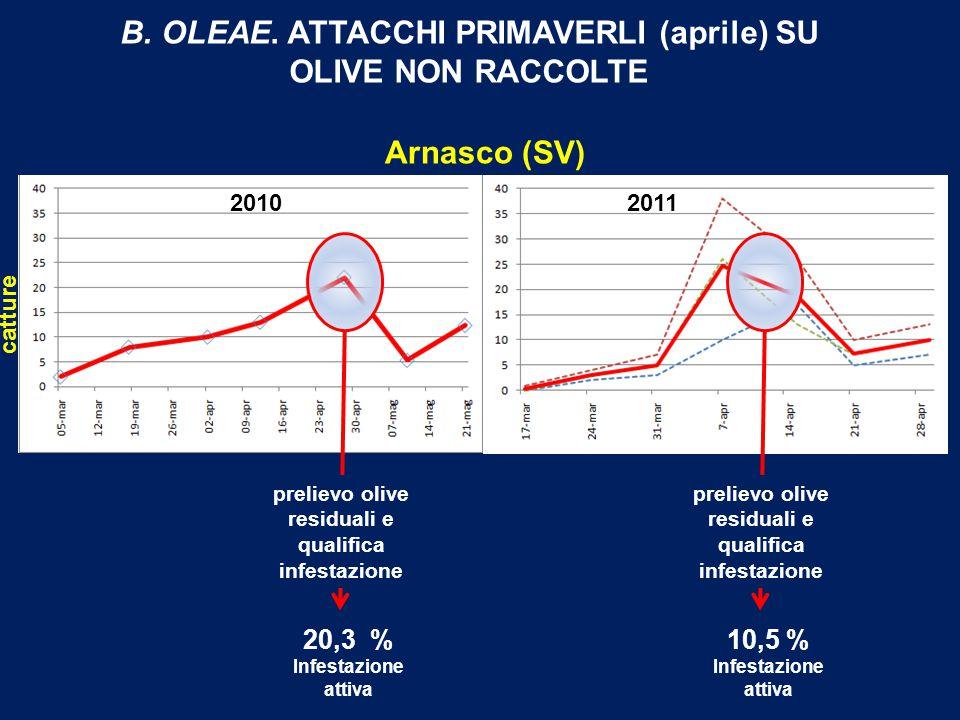 Arnasco (SV) 20102011 catture B.OLEAE.