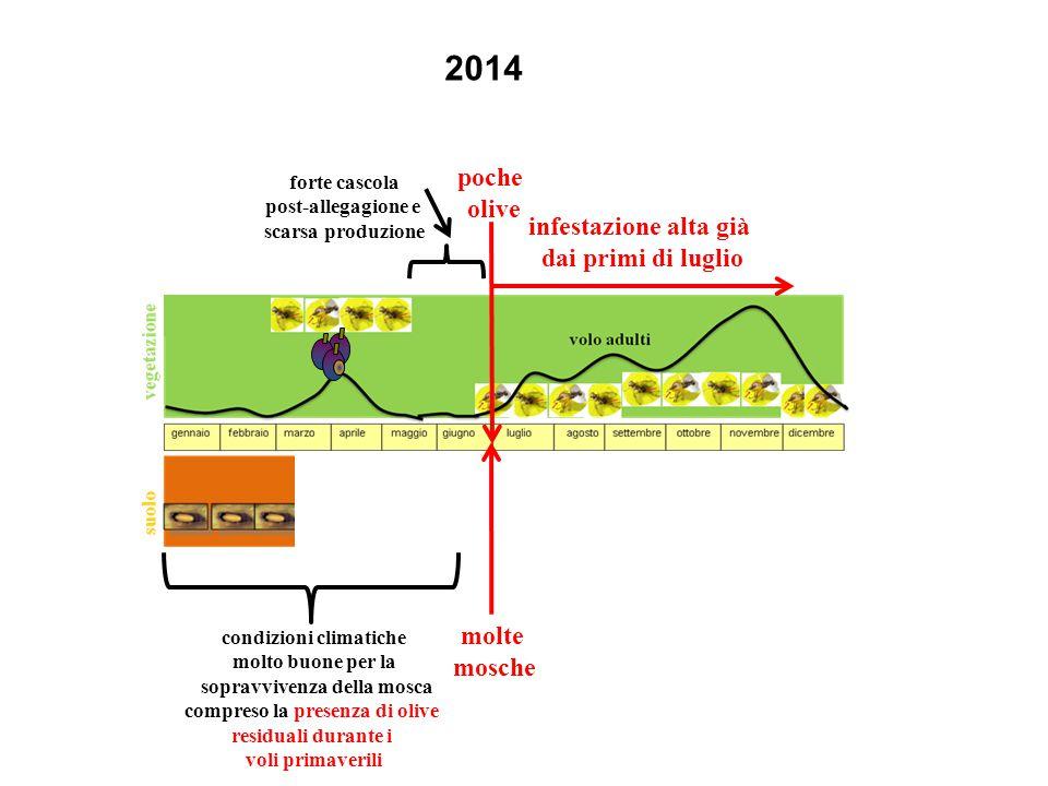2014 molte mosche poche olive condizioni climatiche molto buone per la sopravvivenza della mosca compreso la presenza di olive residuali durante i voli primaverili forte cascola post-allegagione e scarsa produzione infestazione alta già dai primi di luglio