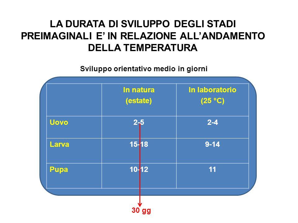 In natura (estate) In laboratorio (25 °C) Uovo2-52-4 Larva15-189-14 Pupa10-1211 Sviluppo orientativo medio in giorni LA DURATA DI SVILUPPO DEGLI STADI PREIMAGINALI E' IN RELAZIONE ALL'ANDAMENTO DELLA TEMPERATURA 30 gg