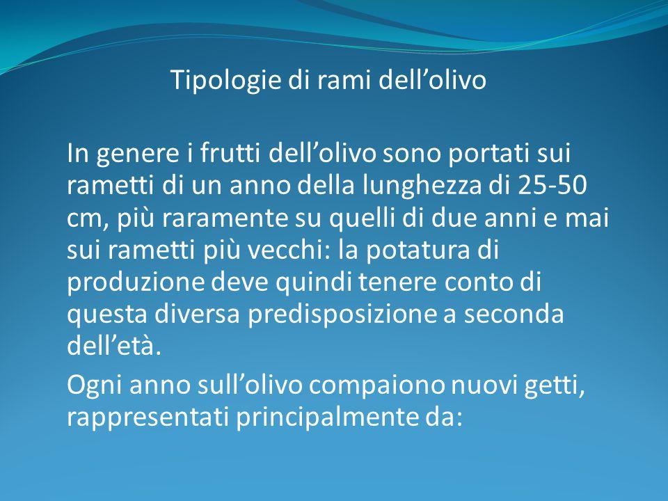 Tipologie di rami dell'olivo In genere i frutti dell'olivo sono portati sui rametti di un anno della lunghezza di 25-50 cm, più raramente su quelli di