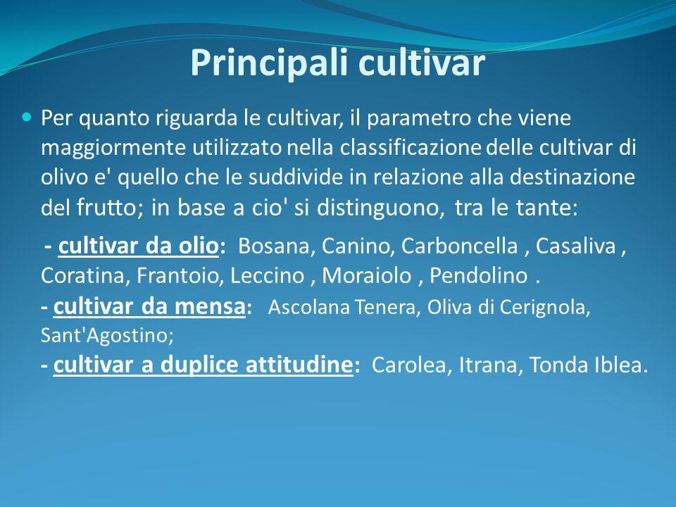 Principali cultivar Per quanto riguarda le cultivar, il parametro che viene maggiormente utilizzato nella classificazione delle cultivar di olivo e' q