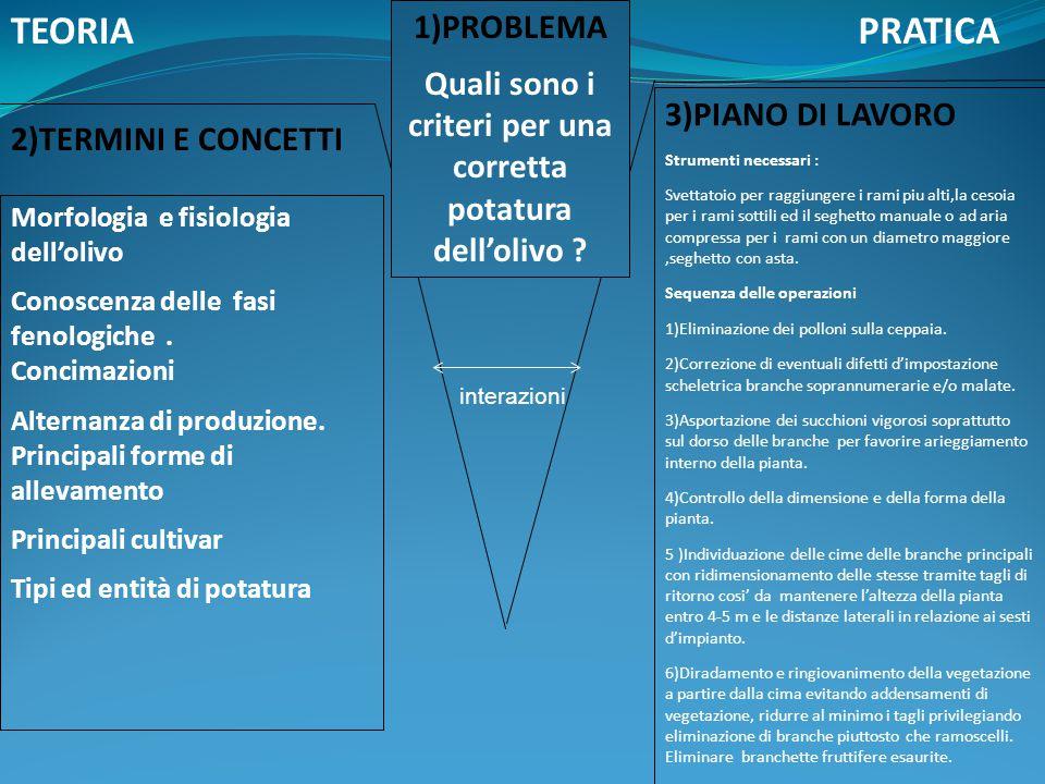 2)TERMINI E CONCETTI Interazione Morfologia e fisiologia dell'olivo Conoscenza delle fasi fenologiche. Concimazioni Alternanza di produzione. Principa