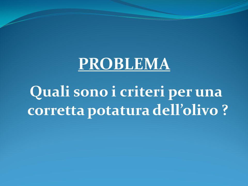 PROBLEMA Quali sono i criteri per una corretta potatura dell'olivo ?