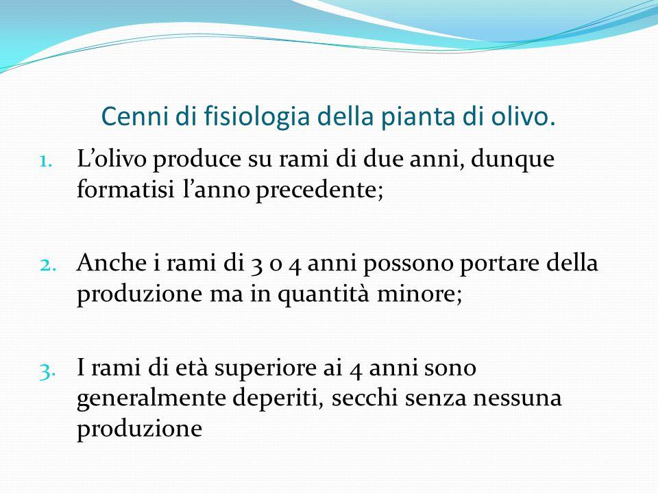 Cenni di fisiologia della pianta di olivo.1.