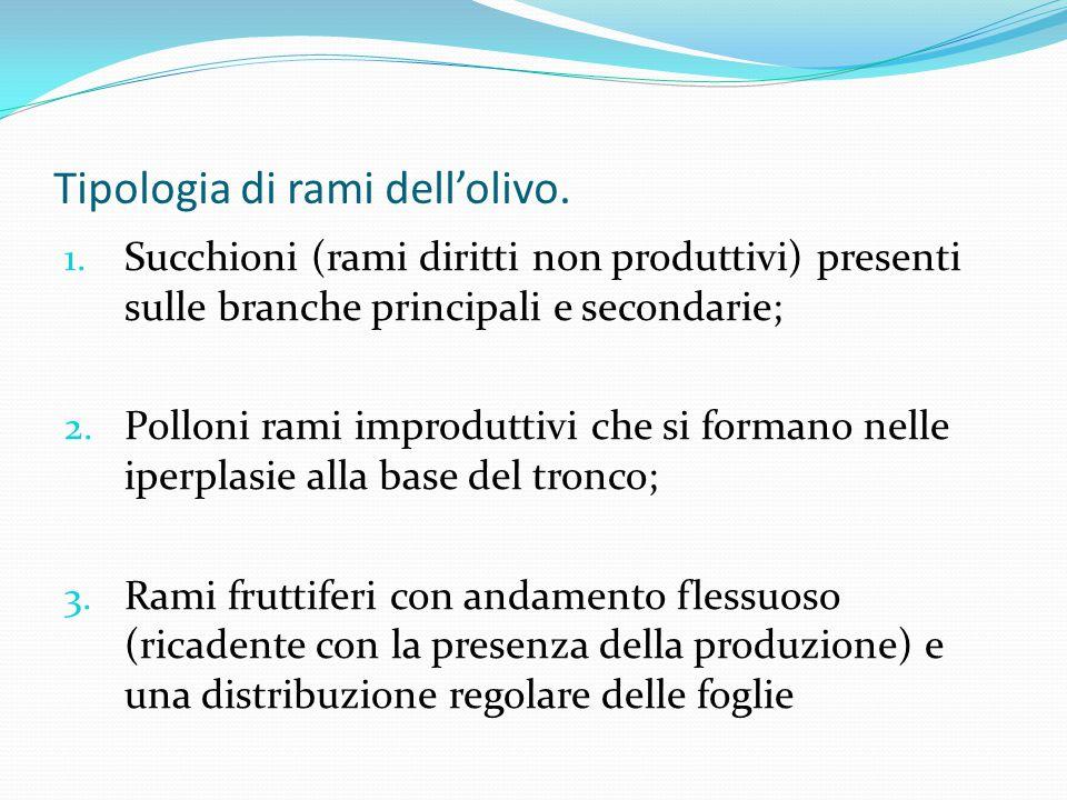Tipologia di rami dell'olivo.1.