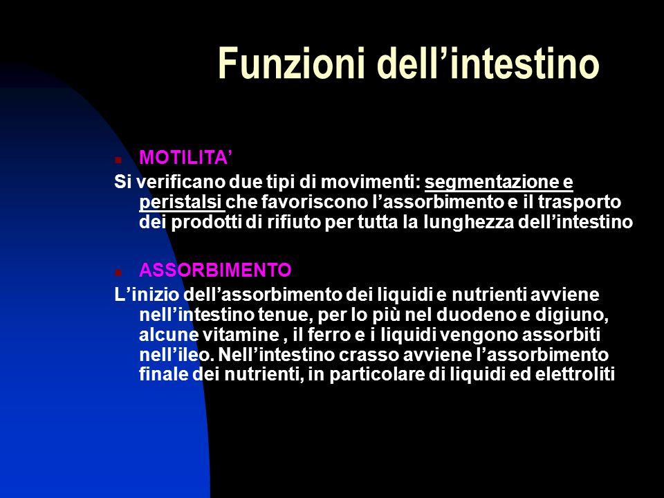 Funzioni dell'intestino MOTILITA' Si verificano due tipi di movimenti: segmentazione e peristalsi che favoriscono l'assorbimento e il trasporto dei pr