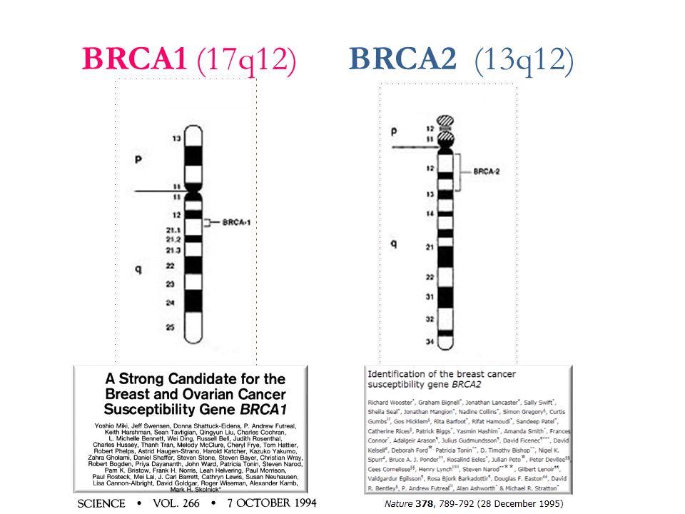 BRCA1 (17q12) BRCA2 (13q12)