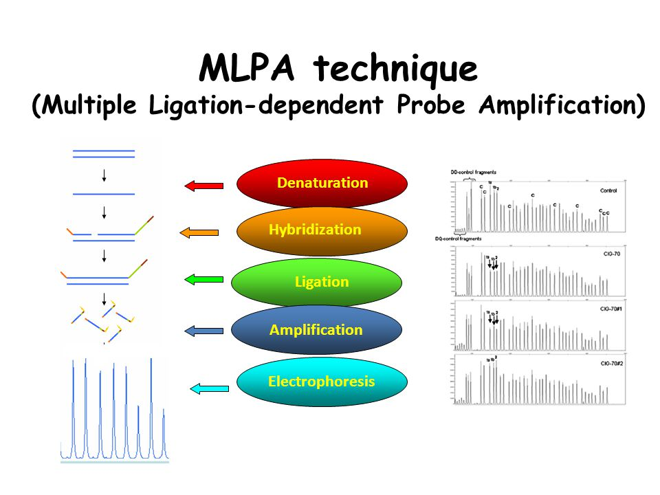 MLPA technique (Multiple Ligation-dependent Probe Amplification) Amplification Electrophoresis Denaturation Hybridization Ligation