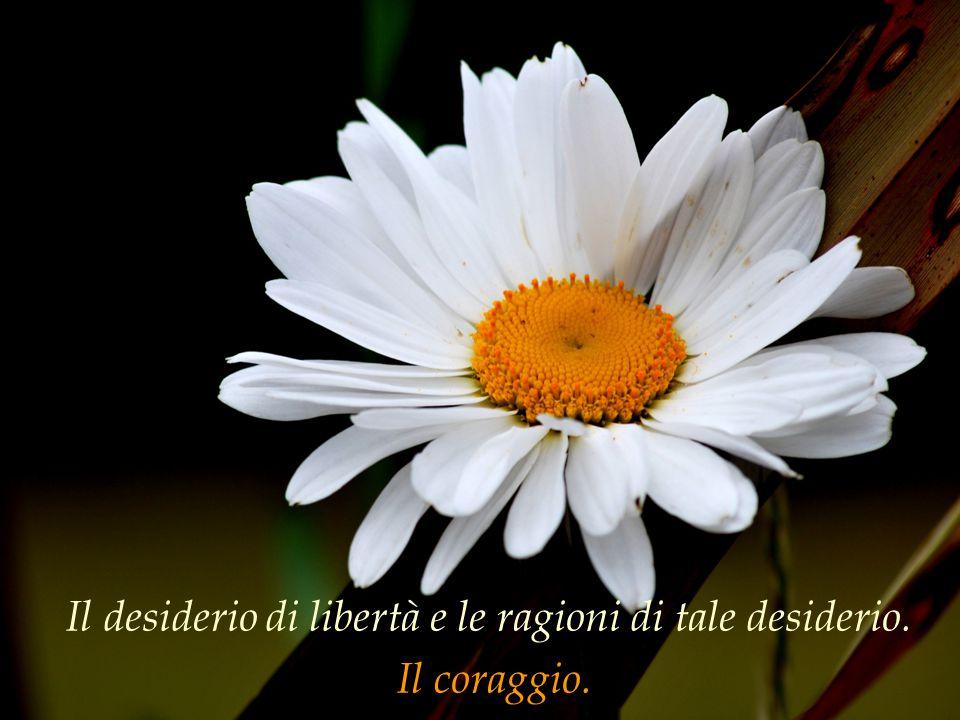 Il desiderio di libertà e le ragioni di tale desiderio. Il coraggio.