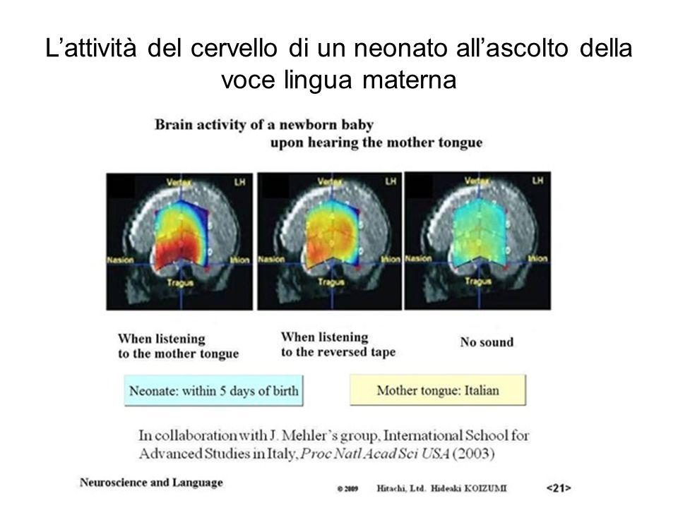 L'attività del cervello di un neonato all'ascolto della voce lingua materna