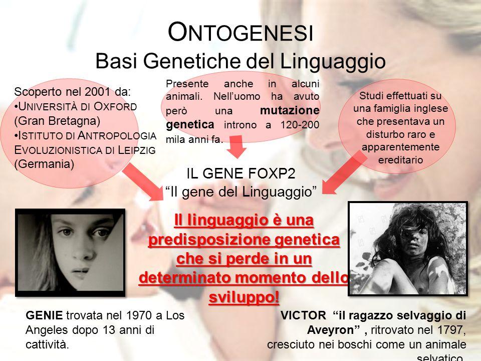"""O NTOGENESI Basi Genetiche del Linguaggio IL GENE FOXP2 """"Il gene del Linguaggio"""" Scoperto nel 2001 da: U NIVERSITÀ DI O XFORD (Gran Bretagna) I STITUT"""