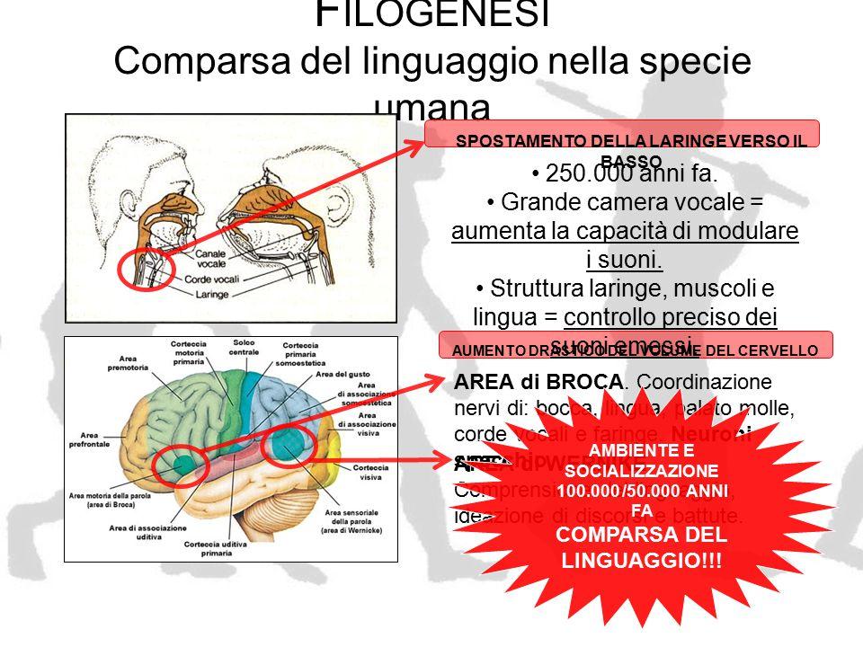 C OMPARSA DEL L INGUAGGIO Il balzo in avanti per l'umanità! EVOLUZIONE GENETICA E BIOLOGICA EVOLUZIONE CULTURALE CONOSCENZE CIRCOLANO VELOCEMENT E SPECIE DOMINANTE CONDIVISIONE DELLE IDEE