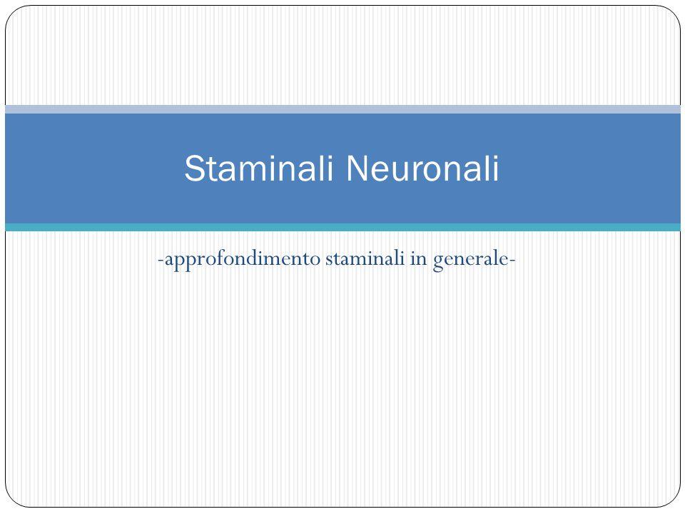 -approfondimento staminali in generale- Staminali Neuronali