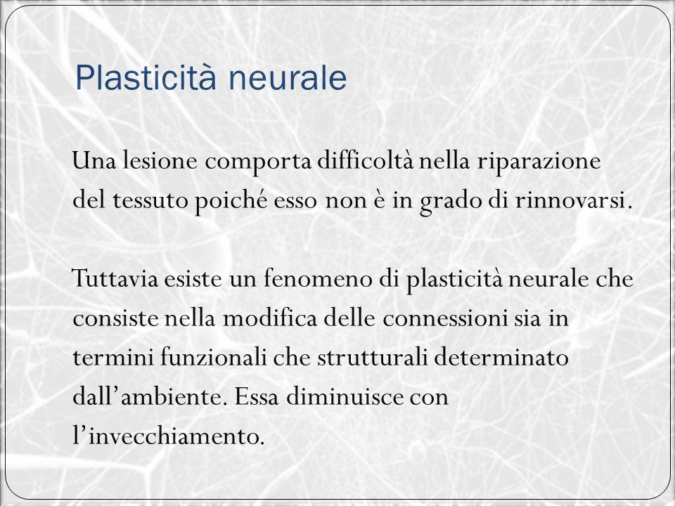 Plasticità neurale Una lesione comporta difficoltà nella riparazione del tessuto poiché esso non è in grado di rinnovarsi. Tuttavia esiste un fenomeno