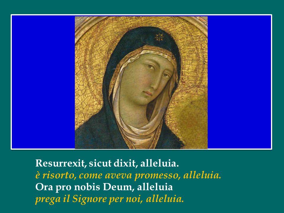 Regina caeli, laetare, alleluia. Regina dei cieli, rallegrati, alleluia. Quia quem meruisti portare, alleluia. Cristo, che hai portato nel grembo, all
