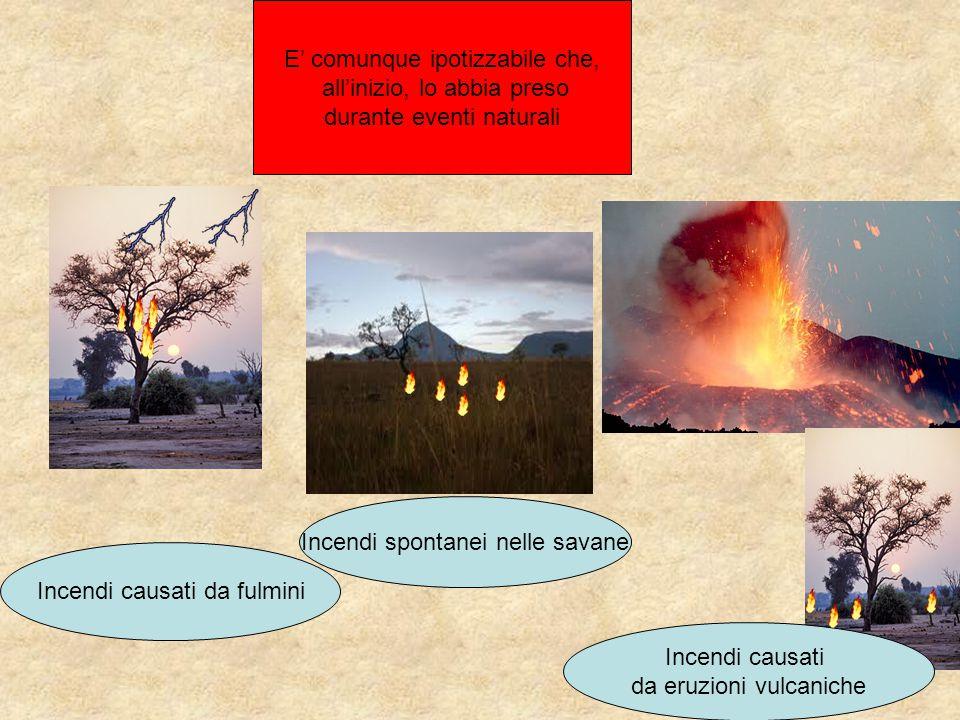 E' comunque ipotizzabile che, all'inizio, lo abbia preso durante eventi naturali Incendi spontanei nelle savane Incendi causati da fulmini Incendi cau