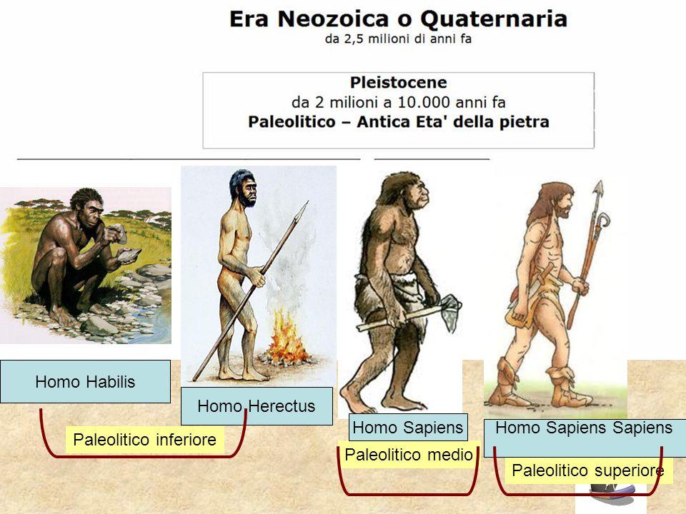Paleolitico superiore Paleolitico medio Homo Habilis Homo Herectus Homo Sapiens Homo Sapiens Sapiens Paleolitico inferiore