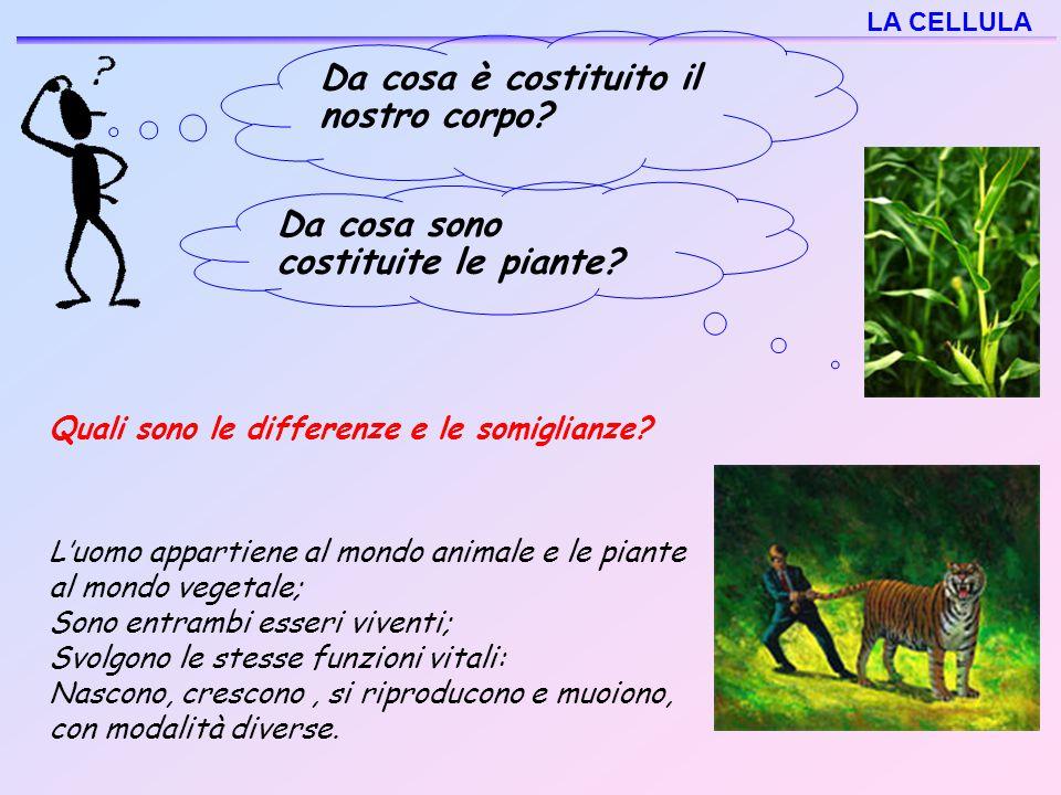 L'uomo appartiene al mondo animale e le piante al mondo vegetale; Sono entrambi esseri viventi; Svolgono le stesse funzioni vitali: Nascono, crescono,