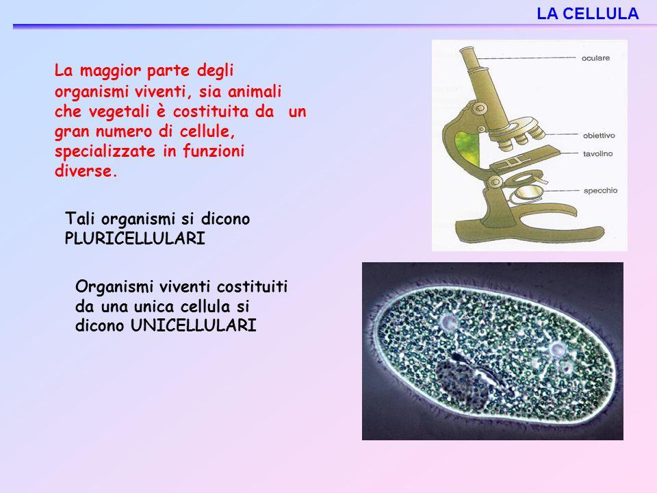 La maggior parte degli organismi viventi, sia animali che vegetali è costituita da un gran numero di cellule, specializzate in funzioni diverse. Tali