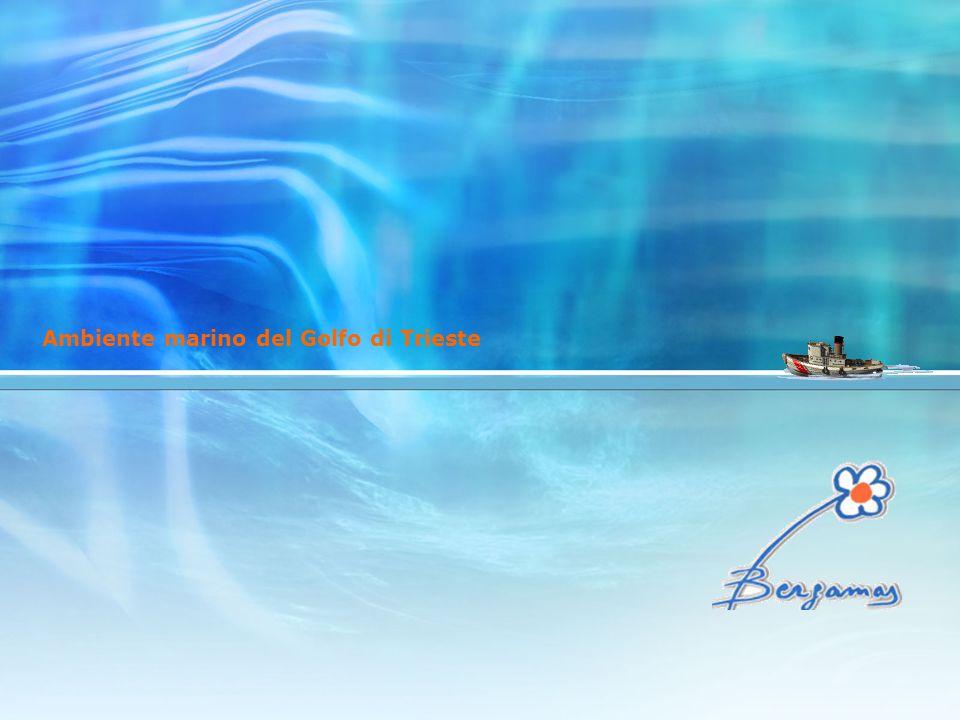 gli obiettivi acquisire la capacità di applicare il metodo scientifico, raccogliere dei dati, elaborarli sistematicamente, discuterli assieme, confrontarli, valutarli e renderli pubblici acquisire conoscenze, competenze ed abilità relative ai principali strumenti di misura impiegati nel monitoraggio ambientale e nelle analisi delle acque acquisire conoscenze relative ai parametri meteo marini che influenzano l'ecosistema marino e costiero del Golfo di Trieste acquisire una conoscenza di base degli strumenti di bordo della nave scuola e degli apparati relativi alla navigazione acquisire buona autonomia individuale e di gruppo in un percorso comune di ricerca scientifica